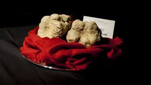 italian white truffle the search is on in italy for the elusive white truffle