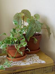 Home Plant Decor by Why I Love Indoor Plants U2013 Living Home
