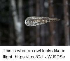 Owl Memes - this is what an owl looks like in flight httpstcoqj1jwj9dse meme