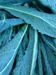 76 best veg kale images on pinterest vegetables seeds and