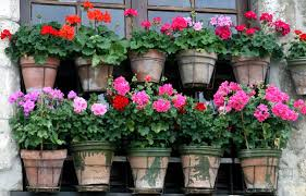 potted flowers best potted flowers iimajackrussell garages best potted