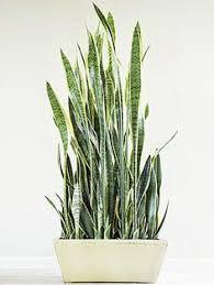10 plants that don u0027t need sunlight to grow sunlight backyard
