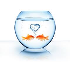 fish valentines happy s day pisces reef fish emporium