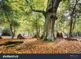 autumn bolderwood arboretum ornamental drive new stock photo