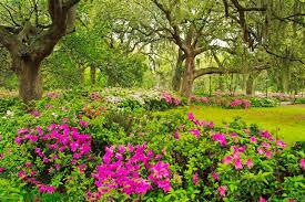 beautiful flower garden flower forest cool wallpapers wonderful