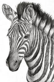 Drawing by Best 25 Zebra Drawing Ideas On Pinterest Zebra Tattoos Zebra