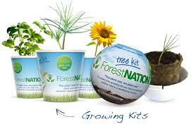 eco friendly christmas gifts for employees and clients