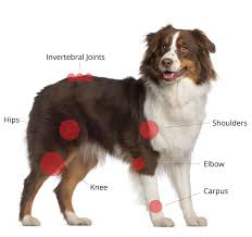 triple h australian shepherds joint max triple strength 120 soft chews joint max for arthritis