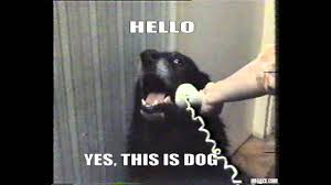 This Is Dog Meme - yes this is dog know your meme