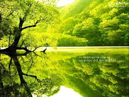 desktop wallpaper green tree h522019 nature hd images