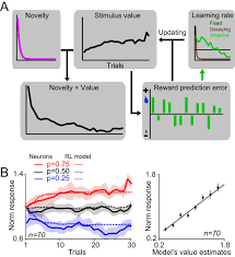 dopamine neurons learn relative chosen value from probabilistic