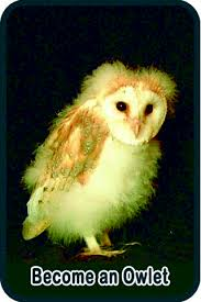 What Does A Barn Owl Look Like Barn Owl Facts And Fun For Kids The Barn Owl Trust