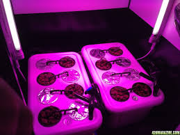 Superclosets by 1st Led Hydroponic White Widow Grow