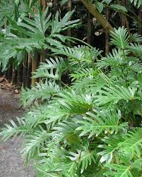 Tropical Potted Plants Outdoor - 288 best plant material images on pinterest plant accounting