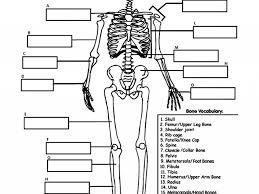 human skeleton printable u2013 hd m com