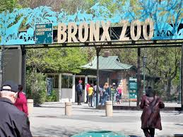 Bronx Zoo Holiday Lights by Free Things To Do In Nyc Travefy