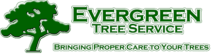 professional tree services purcellville virginia tree removal