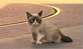 Dat Ass Cat Meme - animated gifs about grumpy cat f word meme found