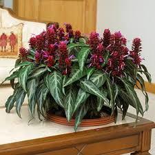 171 best unusual house plants images on pinterest house plants