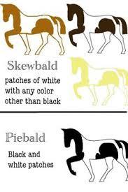 c u0026m explanations paint horses horses and painted horses