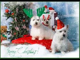 dog christmas cards pet dog cat christmas cards with snow