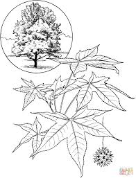gum tree coloring pages free coloring pages