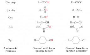chapter 8 enzymes