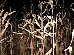 Skinny Bones Pumpkin Patch Blair Nebraska by Nebraska Haunted Corn Maze Finder