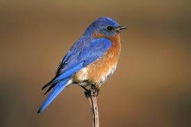 Wisconsin birds images Migratory birds of wisconsin slideshow the nature conservancy jpg