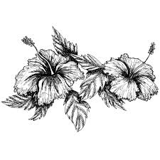 picture hibiscus coloring page 81 with additional coloring pages