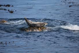 mermaids return from the depths of tv u0027s chum bucket u2013 phenomena