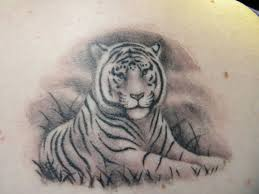 white tiger designs white bengal tiger white tiger