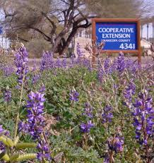 native arizona plants results of a facebook poll u201cfavorite u201d native spring flowers in