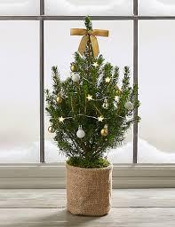 real mini christmas tree with lights christmas postal letterbox mini tree m s