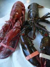 cuisiner homard surgelé recette la cuisson du homard 750g