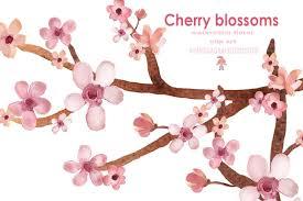 watercolor cherry blossom spring illustrations creative market