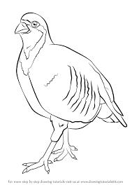 learn draw chukar birds step step drawing tutorials