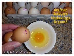 Backyard Chicken Processing by Are Your Backyard Chicken Eggs Organic
