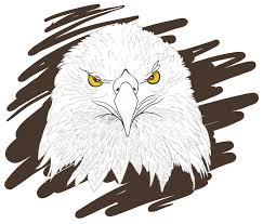 eagle sketch royalty free stock images image 25036989