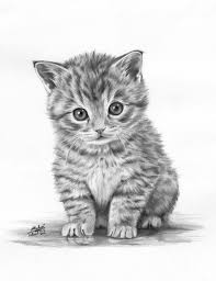 pictures animals pencil sketching drawings art gallery