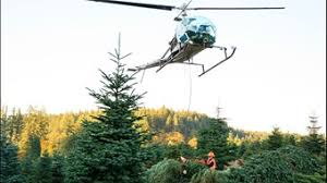 Pacific Northwest Christmas Tree Association - you might pay more for your christmas tree this year amid