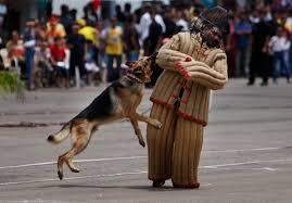 shocking indian army euthanises its canine comrades on retirement