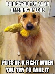 Golden Retriever Meme - love the golden retriever meme apenrose3 golden retrievers