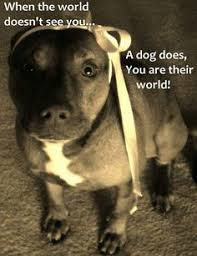 boxer dog sayings sayings for pitbulls pitbull dog quotes u2013 google search new