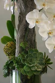 orchid with succulents and driftwood 041 driftwood plants and