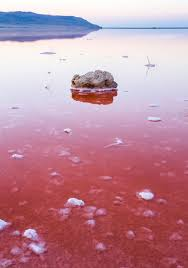 what makes salt lakes pink mnn mother nature network