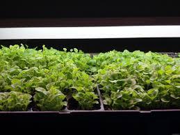 Indoor Kitchen Garden Ideas Simple Indoor Herb Garden Ideas Designs U2014 Emerson Design Simple