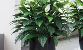 plant beautiful plants for living room decorating with