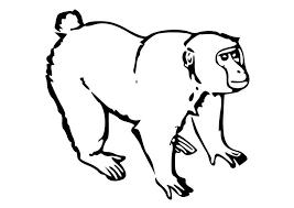 coloriage le singe img 10252