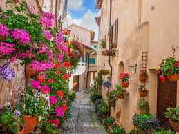 the world u0027s top 5 destinations for spring flowers booking com